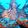 Had contact with Lionfish? We can help.